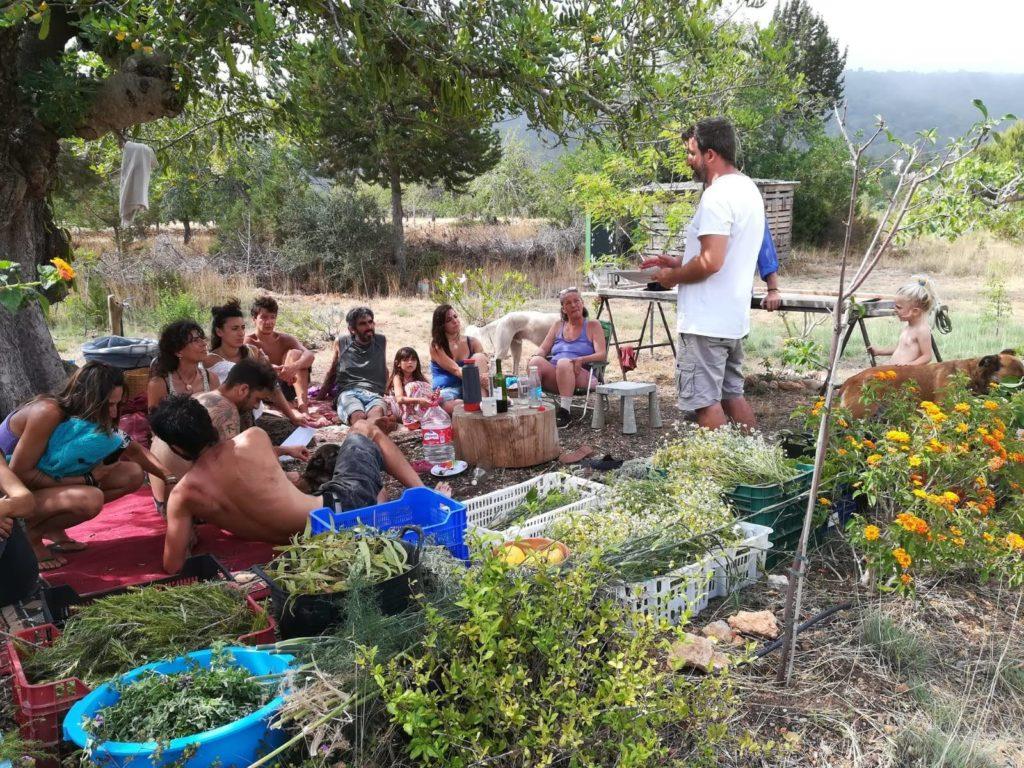 Bosque comestible. Recolección de hierbas. Licor de hierbas Ibiza